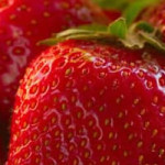 Policoro strawberries